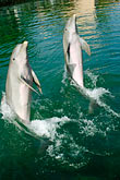 together stock photography | Mexico, Riviera Maya, Puerto Aventuras, Dolphin Discovery, image id 4-850-4270
