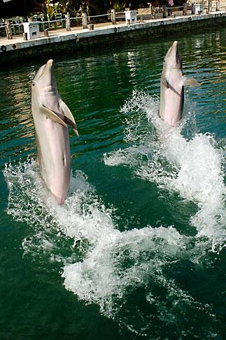 image 4-850-4271 Mexico, Riviera Maya, Puerto Aventuras, Dolphin Discovery