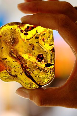 image 4-850-4522 Mexico, Playa del Carmen, Amber specimen at Ambar de Mexico