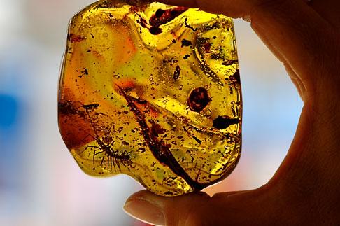 image 4-850-4523 Mexico, Playa del Carmen, Amber specimen at Ambar de Mexico