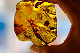 american stock photography | Mexico, Playa del Carmen, Amber specimen at Ambar de Mexico, image id 4-850-4523