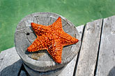 travel stock photography | Mexico, Riviera Maya, Puerto Morelos, Starfish, image id 4-850-4987
