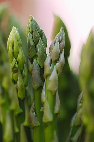 image 6-460-7742 Food, Asparagus, closeup