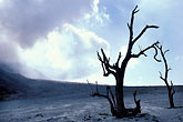 trees stock photography | Montserrat, Volcano, Pyroclastic flow, Gages, image id 0-151-40