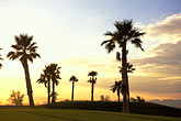 palms golf course stock photography | Nevada, Las Vegas, Bear