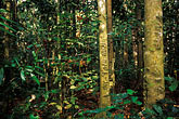 conservation stock photography | Niue, Huvalu Forest, image id 9-501-45