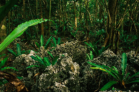 image 9-501-48 Niue, Huvalu Forest