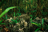 leaf stock photography | Niue, Huvalu Forest, image id 9-501-48