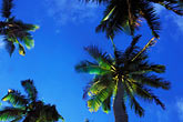 blue sky stock photography | Niue, Palm trees, image id 9-504-12