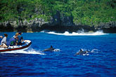 pleasure boat stock photography | Niue, Watching Spinner Dolphins, image id 9-505-15