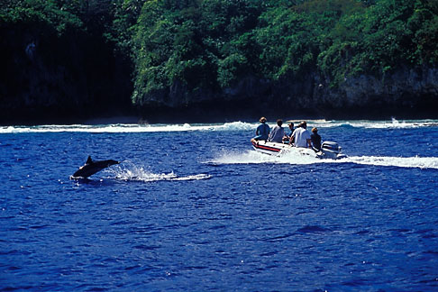 image 9-505-39 Niue, Watching Spinner Dolphins
