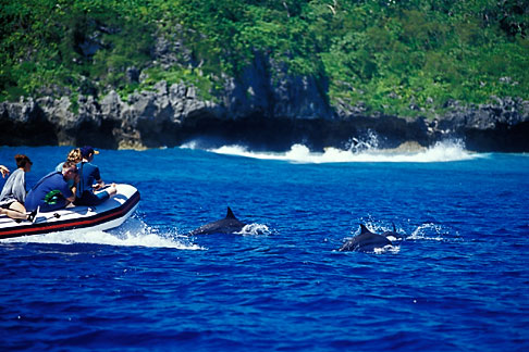 image 9-505-40 Niue, Watching Spinner Dolphins