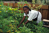 horizontal stock photography | California, Oakland, Student gardening, Summer of Service, image id 3-264-1