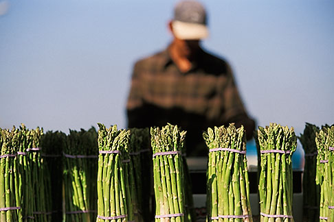 image 4-729-21 California, Oakland, Jack London Square, Farmers Market, Asparagus
