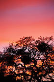 outline stock photography | California, East Bay Parks, Tree at sunset, Black Diamond Mines , image id 6-271-23