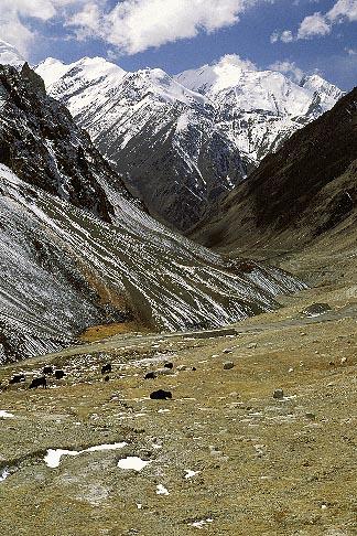 image 4-443-34 Pakistan, Karakoram Highway, Yaks and KKH below the Khunjerab Pass