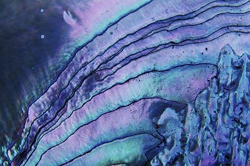 image 3-7-9 Still life, Abalone shell