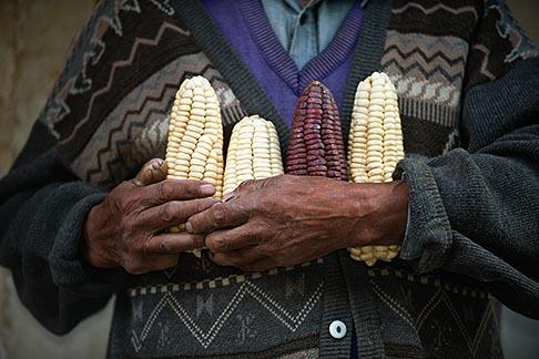 image 8-761-1257 Peru, Ollantaytambo, Man holding varieties of Andean corn