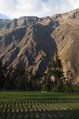 image 8-761-1283 Peru, Ollantaytambo, Fields in Urubamba Valley