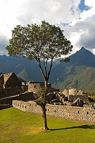 image 8-761-1867 Peru, Machu Picchu, Sacred Plaza and soliatry tree with ruins of Inca houses