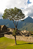 inca ruins stock photography | Peru, Machu Picchu, Sacred Plaza and soliatry tree with ruins of Inca houses, image id 8-761-1867