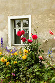 red flower stock photography | Poland, Jelenia Gora, Garden and window, image id 4-960-1287