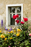 red flower stock photography | Poland, Jelenia Gora, Garden and window, image id 4-960-1290