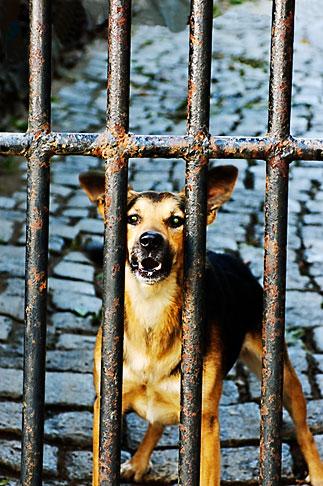 image 4-960-1385 Dogs, Guard dog