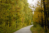 europe stock photography | Poland, Jezowe, Country road through forest, image id 7-715-250