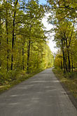 europe stock photography | Poland, Jezowe, Country road through forest, image id 7-715-7973