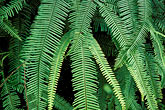 national stock photography | Tropical plants, Green fern, image id 1-354-53