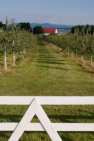 image 5-750-9517 Canada, Quebec, Isle dOrleans, Orchard