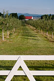 orchard stock photography | Canada, Quebec, Isle d