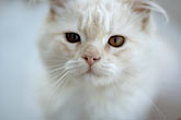 gato stock photography | Animal, Cat, image id S5-125-7891