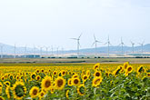 windmills stock photography | Spain, Cadiz, Field of sunflowers, image id S5-128-9565