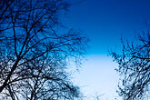 blue sky stock photography | Trees, Bare trees, image id S5-30-2068