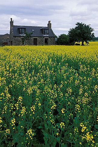 image 1-537-24 Scotland, Aberdeenshire, Farmhouse, Rothienorman