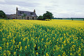 yellow stock photography | Scotland, Aberdeenshire, Farmhouse, Rothienorman, image id 1-537-26