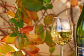 leaves stock photography | Wine, Glass of Chenin Blanc, white wine, image id 1-411-24