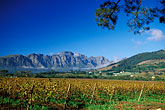 horizontal stock photography | South Africa, Franschhoek, Vineyards, Franschhoek Valley, image id 1-415-22