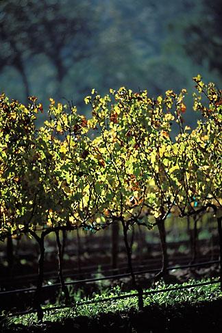 image 1-415-5 South Africa, Franschhoek, Vineyards, Franschhoek Valley