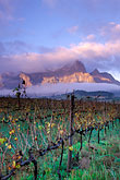 grape vines stock photography | South Africa, Franschhoek, Sunrise on Groot Drakensteinberg, image id 1-415-69