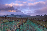 grape vines stock photography | South Africa, Franschhoek, Sunrise on Groot Drakensteinberg, image id 1-415-77