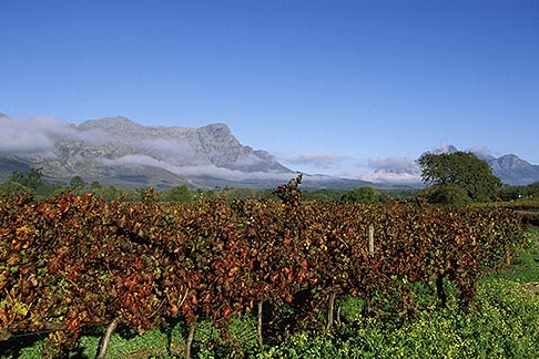 image 1-415-83 South Africa, Franschhoek, Vineyards, Franschhoek Valley