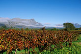 horizontal stock photography | South Africa, Franschhoek, Vineyards, Franschhoek Valley, image id 1-415-83