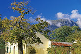 tree stock photography | South Africa, Franschhoek, Dassenberg winery, image id 1-416-15