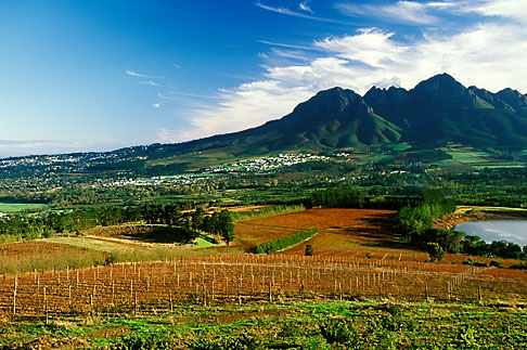 image 1-419-41 South Africa, Helderberg, Vineyards and mountains, Vergelegen Wine Estate