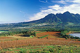 fields and mountains stock photography | South Africa, Helderberg, Vineyards and mountains, Vergelegen Wine Estate, image id 1-419-41