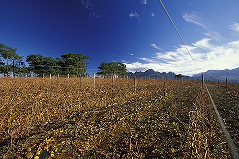 image 1-419-51 South Africa, Helderberg, Vineyards and mountains, Vergelegen Wine Estate