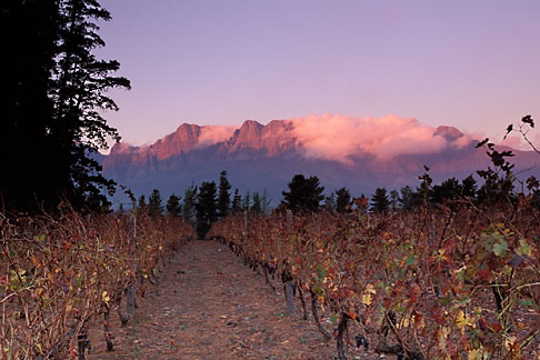 image 1-419-58 South Africa, Helderberg, Vineyards and mountains, Vergelegen Wine Estate